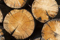 Logs from a saw cut Royalty Free Stock Photo