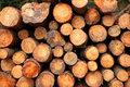 Logs stacked Stock Photo
