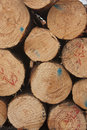 Logs stacked with their ends exposed Royalty Free Stock Photo