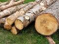 Logs of tree Royalty Free Stock Photos