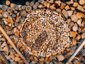 Logs of a tree. The sawn wood Royalty Free Stock Photo