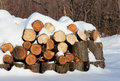 Logs in winter Royalty Free Stock Photography