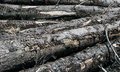 Logs of wood Royalty Free Stock Photo