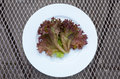 Lollo rosso lettuce leaf on a plate Royalty Free Stock Images