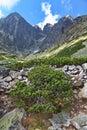 Lomnicky stit - peak in High Tatras mountains