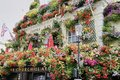 stock image of  Incredible Flower Display on Exterior of the Churchill Arm Pub in London