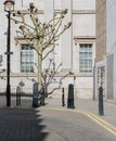 stock image of  London street with bike and tree