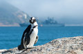 Lone african penguin on boulder with naval ship behind Stock Images