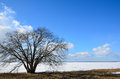 Lone alder tree coast early springtime ice still left lake Stock Photos