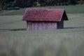 Lone Barn In Grain Field Royalty Free Stock Photo