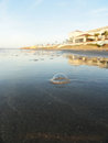 Lone bubble a on galveston island beach in texas Stock Photos