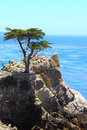 Lone cypress at california coast highway one Stock Photography