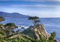 Lone Cypress - 17 mile drive Royalty Free Stock Photo