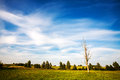 Lone dead tree landscape with a in a field Royalty Free Stock Photos