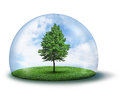 Lone green tree under protective dome Stock Photo