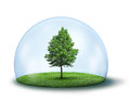 Lone green tree under protective dome Royalty Free Stock Image