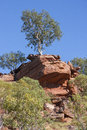 Lone gum tree on rocky outcrop single growing a outback queensland Stock Image