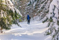 Lone hiker with a backpack walking along the trail in the winter mountains view of snow covered conifer trees and deep snow at Stock Photos