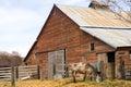 Lone Horse Grazes On Feed Farm Ranch Barn Corral Royalty Free Stock Photo