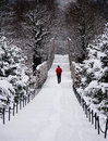 Lone man walking through snowy forest a is deep snow covering a path Stock Photos