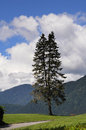 A lone pine tree against the mountains of british columbia at cleveland dam Stock Images