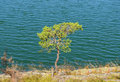 Lone pine tree at the edge of cliff Stock Photo