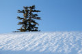 Lone pine tree field snow against blue sky Royalty Free Stock Photos