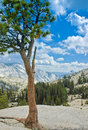 Lone pine view of Half Dome Yosemite National Park Royalty Free Stock Image