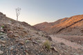 Lone quiver tree next to dry river bed richtersveld south africa Royalty Free Stock Photos