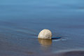 Lone sand dollar on beach wet background Stock Photo