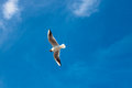 Lone seagull in a blue sky Royalty Free Stock Photos
