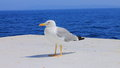 A lone seagull on the ship Royalty Free Stock Images