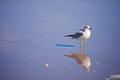 Lone seagull a standing on a windy beach Royalty Free Stock Photos