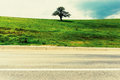 Lone or Single Tree in Green Countryside Royalty Free Stock Photo