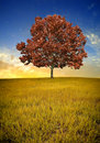 Lone tree Royalty Free Stock Photo
