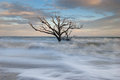 Lone Tree in Atlantic Ocean Charleston Stock Images