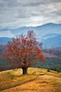 Lone tree in autumn mountains. Cloudy fall scene Royalty Free Stock Photo