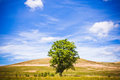 Lone tree in a beautiful summer landscape green of gently rolling hills under cloudy blue sky Royalty Free Stock Photo