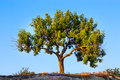 Lone tree and blue sky Royalty Free Stock Images