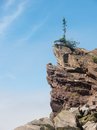 Lone tree on cliff a sparse evergreen the edge of a against a blue sky Stock Photography