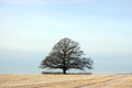 Lone tree in countryside Royalty Free Stock Photo