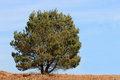 Lone tree in countryside with blue sky background Royalty Free Stock Photos