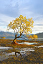 The lone tree dawn Royalty Free Stock Photo