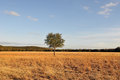 Lone tree in field Royalty Free Stock Photos