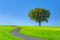 Lone tree on a green meadow Royalty Free Stock Photo