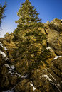 Lone tree in hidden falls canyon this is in big cottonwood canyon Stock Image