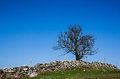 Lone tree at a hill with stonewall and blue sky Royalty Free Stock Images