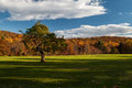 Lone tree inside the new jersey botanical garden on a late autumn afternoon Royalty Free Stock Image
