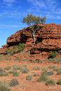 Lone Tree - Kings Canyon Royalty Free Stock Photos