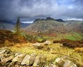 Lone tree and the langdales Stock Photography